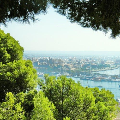 Five Future Favourites in Palma